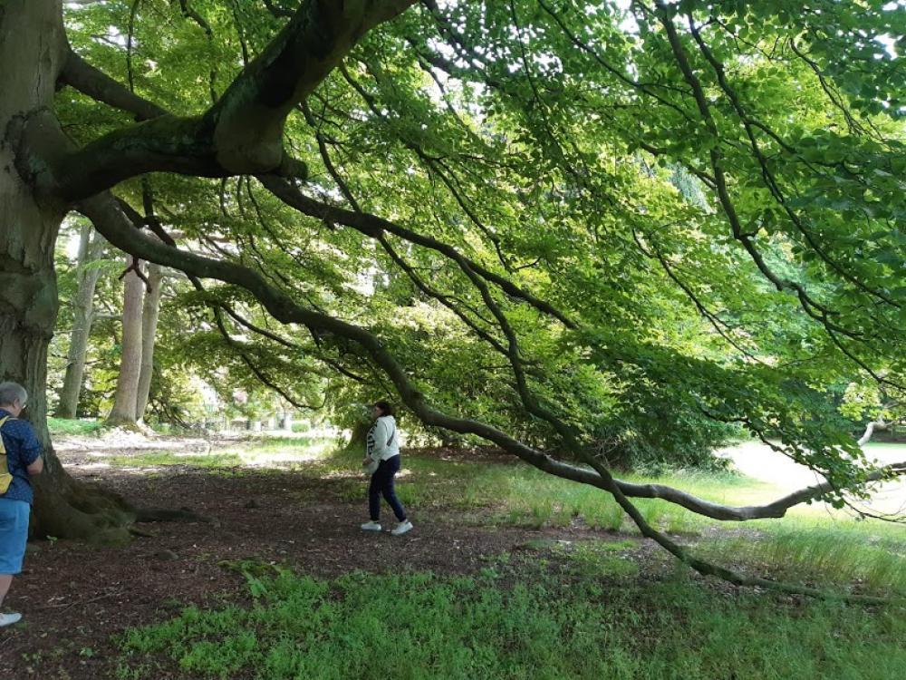 Windą do lasu - Porażyn 10.06.21r.