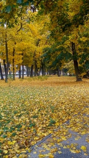 Już rozpoczęła się astronomiczna jesień