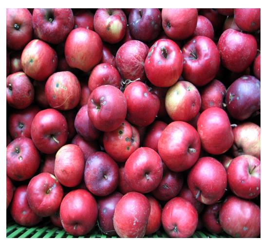 Jabłka w ramach programu