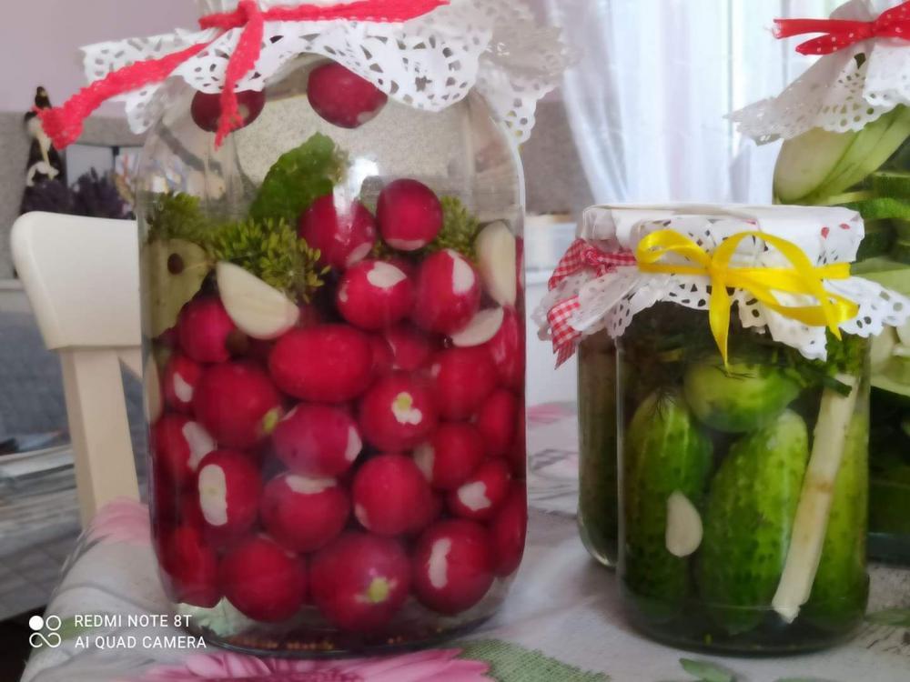2 słoiki leżące na stole  z  kiszonymi   rzodkiewikami  i ogórkami.